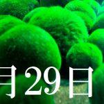 3月29日生まれの当たる365日誕生日占い(同性あり)